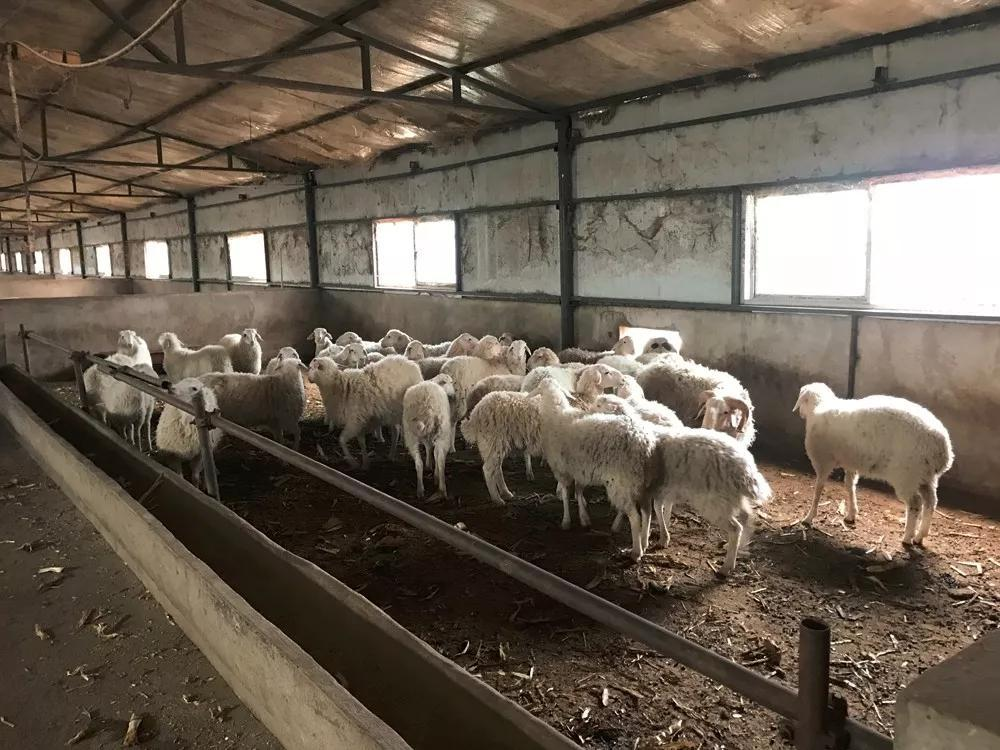 【收案公告】凯诺拆迁律师介入广西柳州养殖场被强制拆除案